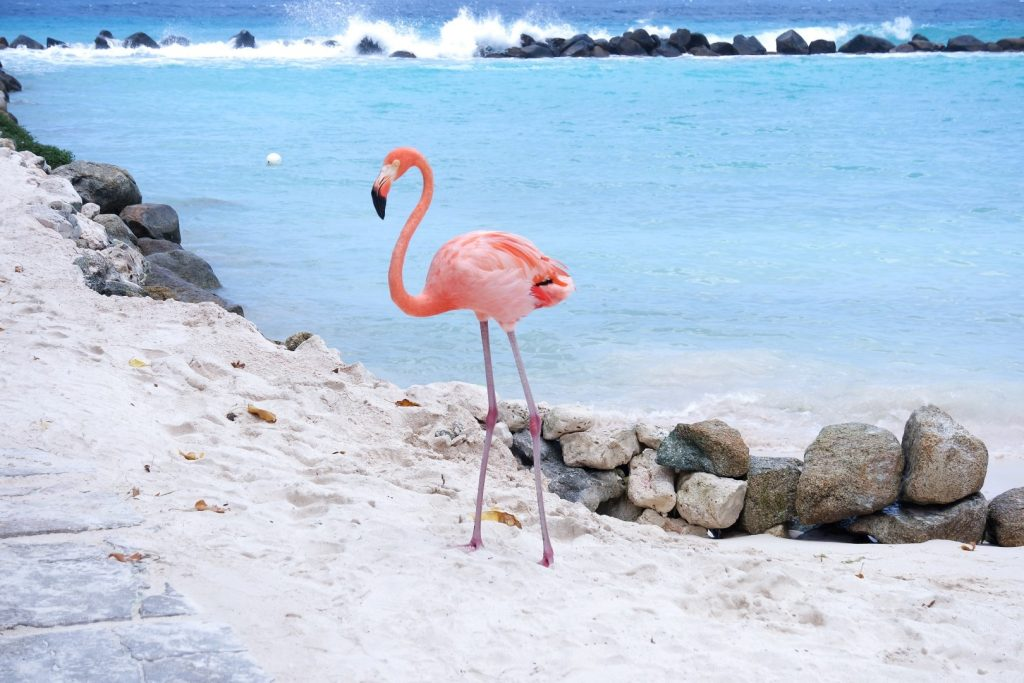 Aruba beaches Flamingo Beach