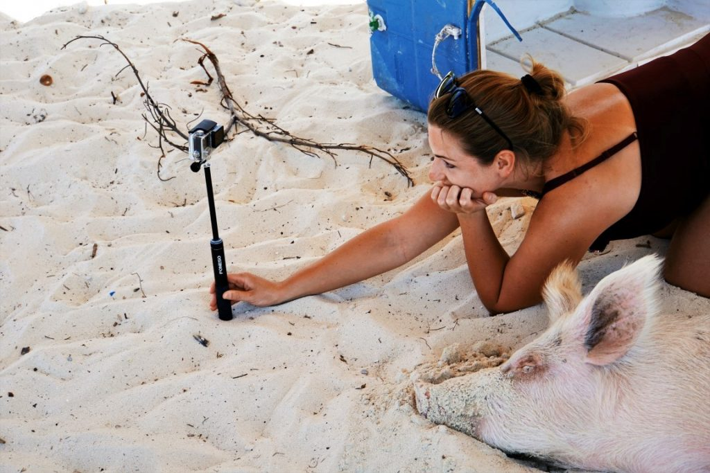 Pig selfie on Pig Island