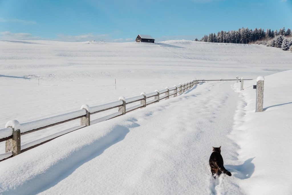 Oberstaufen Allgäu in winter with Hauber's farm cat